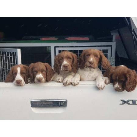 Thriving Pups