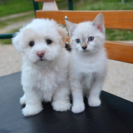 New Dog & Cat Laws